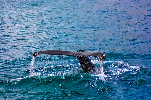 Whale watching in Mirissa – Villas in Sri Lanka